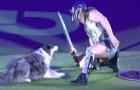 Het talent van deze hond en zijn trainer zijn buitengewoon: hier zie je de twee in een duel tussen gladiatoren!