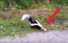 Um homem vê um furão desesperado pela rua: quando chega perto dele entende o porquê...
