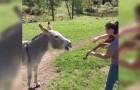 Sie beginnt Geige zu spielen, aber keineswegs erwartete sie DIESE Reaktion des Esels!