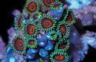 25000 photographies prises en un an: la beauté des coraux en ultra accéléré est INCROYABLE