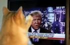 Video di Politica