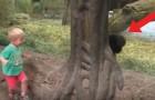 Video Affenvideos Affen