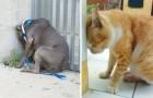 Si vuestro animal apoya la cabeza contra la pared sin motivo vayan enseguida al veterinario. Por este motivo