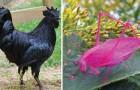 Folies de la nature: voici 20 variantes d'animaux que vous ne connaissiez pas!