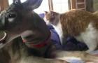 Video  Deers