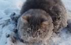 Encuentran un gato inmovil sobre la calle: cuando se acercan entienden porque no se ha escapado