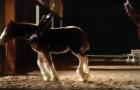 Video Pferdevideos Pferde