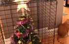 Vidéos sur Noël