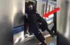 Video Zugvideos Züge
