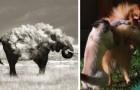 20 'Gewone' Foto's Die Door Timing Geweldige Kunststukken Zijn Geworden!