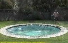 Video Poolvideos Pools