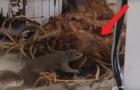 Video Video's van Eekhoorns Eekhoorns