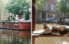 Video  Olanda