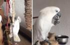 Video  Pappagalli