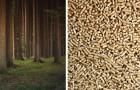 L'uso del pellet NON è eco-sostenibile: uno studio rivela l'errore dei governi e delle industrie