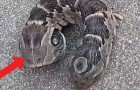 Video Video's  Natuur Natuur
