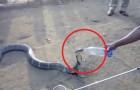 Video Video's van Slangen Slangen