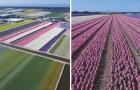 Vídeo da Holanda