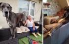 Nous vous présentons le chien le plus grand du monde : Freddy, un Grand Danois !