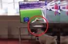 Video di Calcio