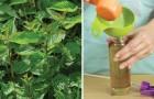 Veja como acabar com as ervas daninhas com remédios econômicos e naturais