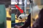 Video  China
