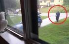 Een kaketoe staat voor het raam als zijn baasje thuiskomt: deze scene voltrekt zich elke dag!