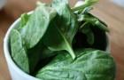 5 producten van plantaardige oorsprong die enorm veel eiwitten bevatten
