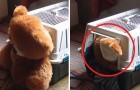 Este cãozinho não dorme sem seu ursinho de pelúcia: é um sarro!