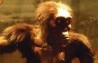 De voorouder van de moderne mens komt misschien niet uit Afrika: nieuwe fossielen gevonden in Europa