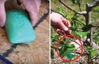 Video  Gardening