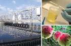 Des chercheurs découvrent comment utiliser de l'urine pour produire de l'électricité et de l'eau potable.
