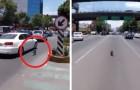 Un perro huye del control de su patron: la carrera por las calles de la ciudad es escalofriante