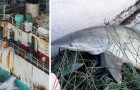 Vidéos de Requins