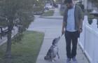 Un uomo adotta un cane dal canile. Un giorno, mentre camminano, il cane si siede e lo guarda