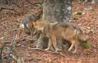 Uma câmera escondida filma um pedaço de floresta por um ano: o resultado é magnífico!