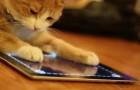 Animali che giocano con l'Ipad