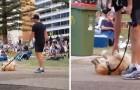 Esse cãozinho se finge de morto no parque: a sua estratégia é perfeita!