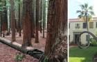 19 alberi strafottenti che si sono rifiutati di morire