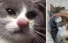17 fotos de gatos que perderam a guerra contra as abelhas