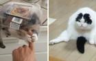 Video Video's van Katten Katten