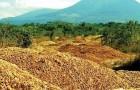 Una fabrica de jugo descarga toneladas de cascara de naranjas en un terreno: 16 años despues esta irreconocible