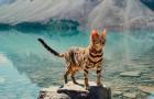 Vi presentiamo Suki, il gatto avventuriero che si gode la vita più di tutti noi
