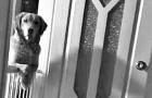 Der Hund, den sie aus dem Tierheim holten verbringt die ganze Nacht damit, die Herrchen zu beobachten: Hier der Grund warum er das tut