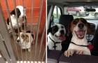 15 foto di animali prima e dopo essere stati portati via da un rifugio