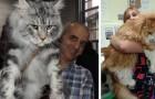 Cual es el gato mas grande del mundo? Descubre alguna curiosidad sobre un gato de 11 kg de peso