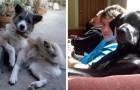 Cani che si comportano come umani: la simpatia di questi scatti vi conquisterà