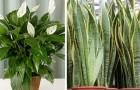 7 kamerplanten om in huis te hebben om de luchtkwaliteit te verbeteren