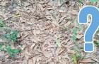 Auf diesem Foto ist eine Schlange: kannst du sie Sehen?