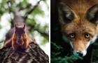Gli scatti alla fauna finlandese di questo fotografo vi trasporteranno in un mondo magico